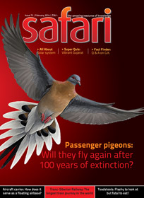 Safari Magazine - February 2014 issue - Cover Page