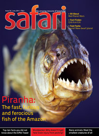 Safari Magazine | June 2014 Issue | Views And Reviews