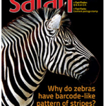 Safari Magagize - November 2014 Issue - Cover Page