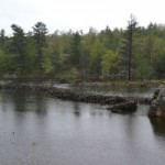 A dam by Beaver