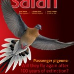 Safari Magazine - February 2014 issue - Cover Page